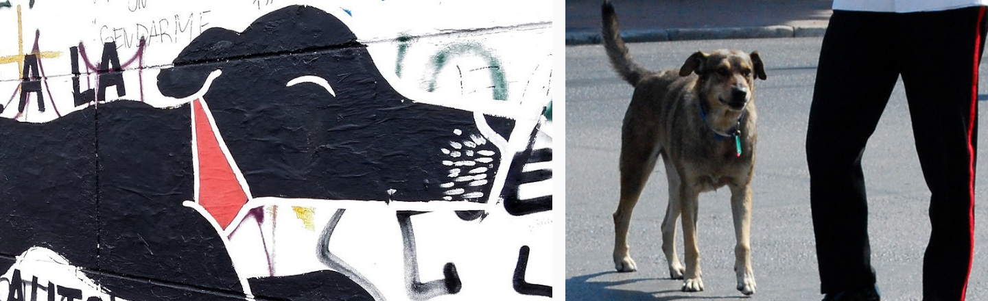 Incredibly Badass Protest Pups From Around The World