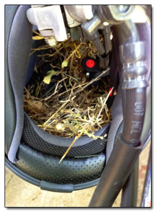 This is a picture of my helmet hanging on the handle bar of my bike. In the few hours I spent visiting my parents, a bird built a nest in the helmet.