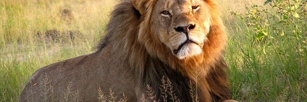 Cecil The Lion Made You A Moron: 5 Stages Of Facebook Rage