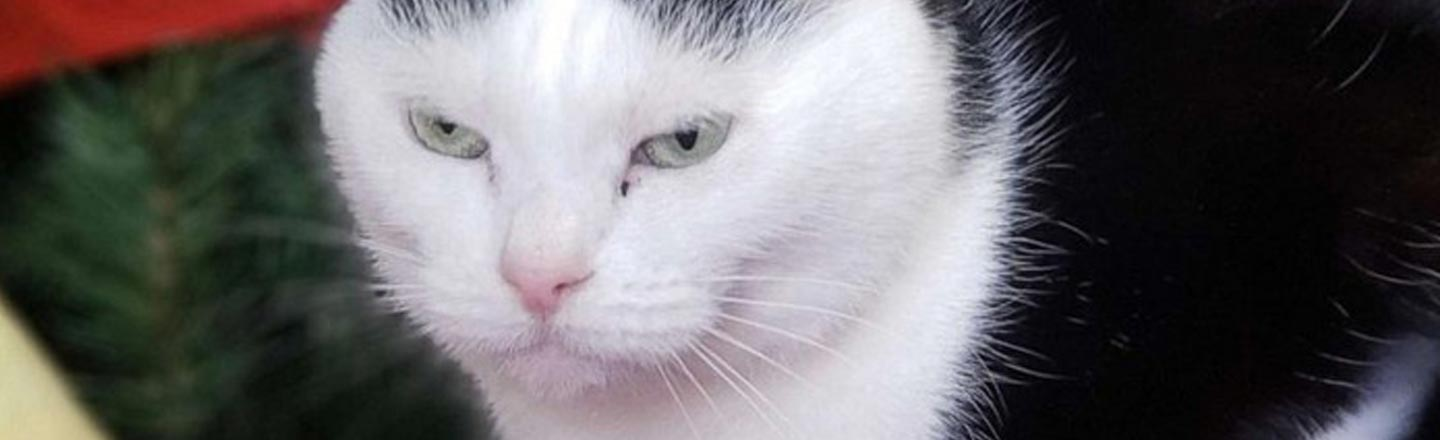 The World's Worst Cat Has Been Adopted, Proving We All Deserve Love