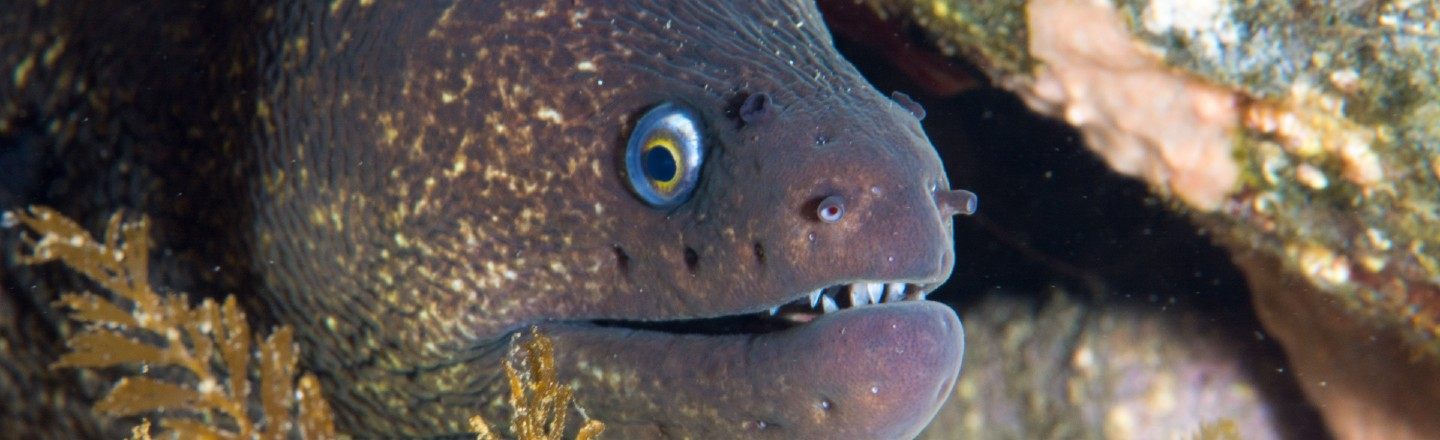 Science Doesn't Know How Eels Bone