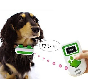 5 Pet Products For People Who Probably Shouldn't Own Pets