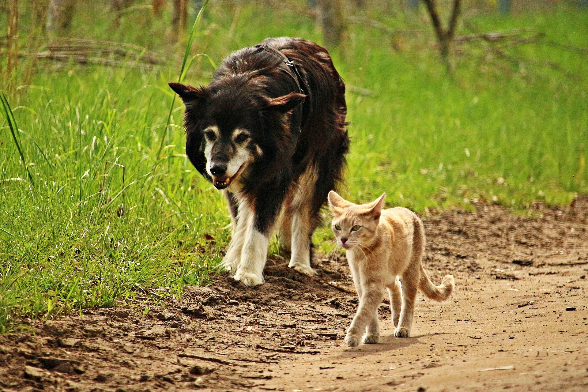 5 Reasons The War Between Dog And Cat People Needs To Stop