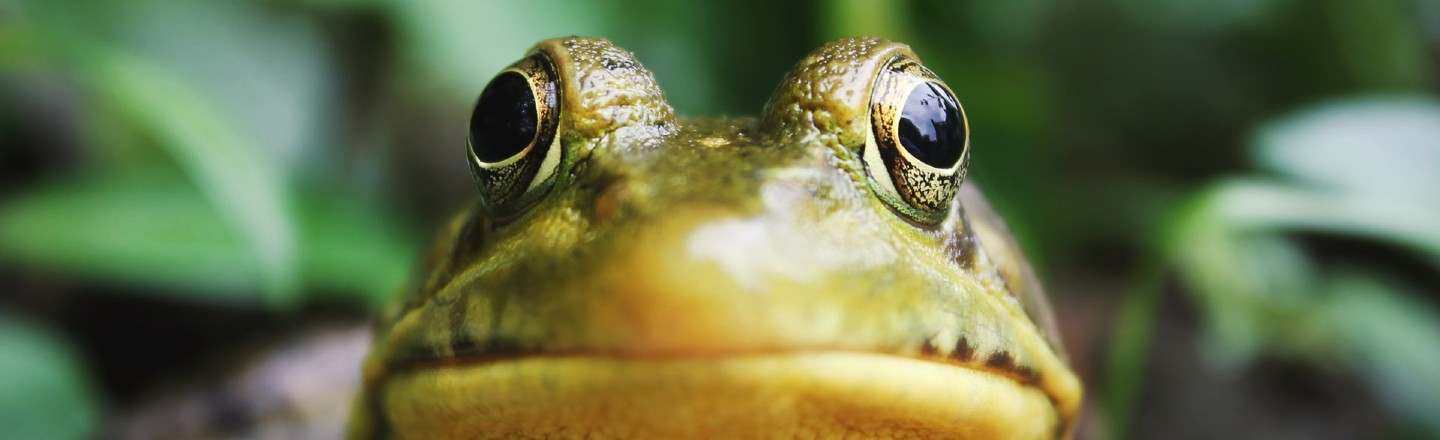 Bible's 'Plague of Frogs' May Have Been Just One Giant Frog