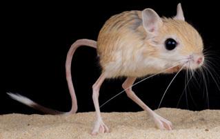 6 Animals That Look Like Drunken Combinations of Other Ones