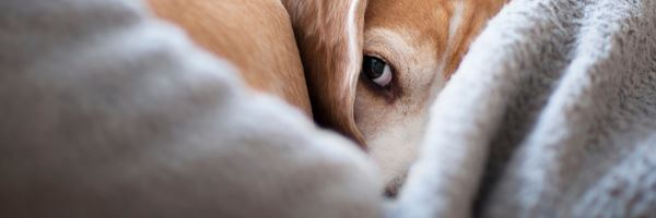 4 Things That Shock You About Dogs (If You Never Had One)