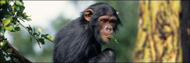 6 Surprisingly Advanced Ways Animals Use Medicine