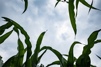 5 'Good' Ideas That Are Secretly Propaganda - a shot of the sky from a cornfield