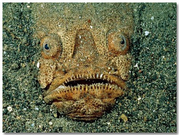 10 Real Sea Creatures Lifted Directly from Your Nightmares