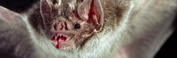 6 Vampires Terrorizing The Animal Kingdom Right Now