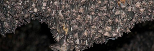 6 Massive Animal Swarms That Are Impressive And Horrifying