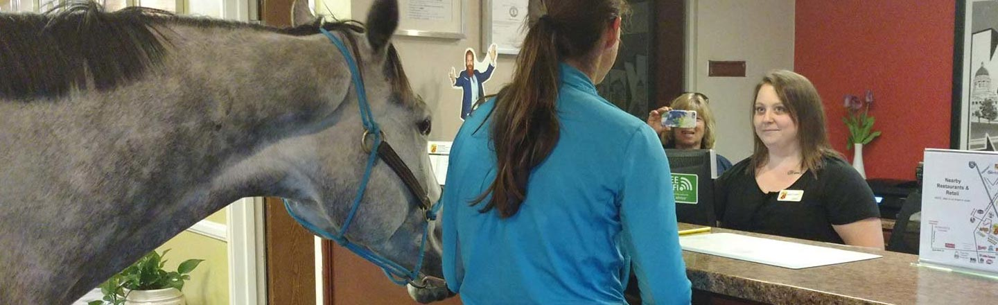 A Woman Got Her Horse Into Her Hotel Room, But Why?