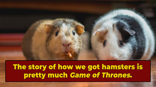 The Wild (Incestuous) Story Of The 'Adam and Eve' Of Hamsters