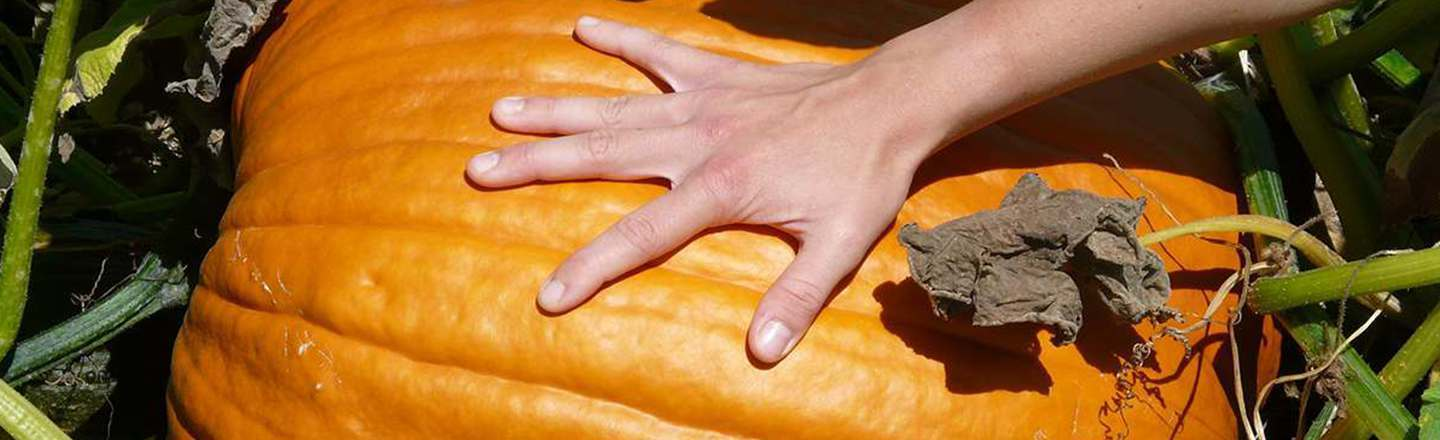 15 Apologies Concerning The Pumpkin I Stole From You