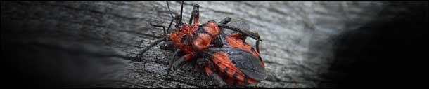 Nature's 6 Most Diabolical Predators