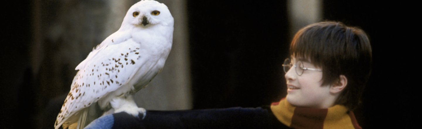 'Harry Potter' Has Been a Nightmare For Real-Life Owls