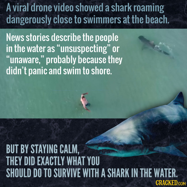 Drone Footage Shows Chill Shark Swimming Near Chill People