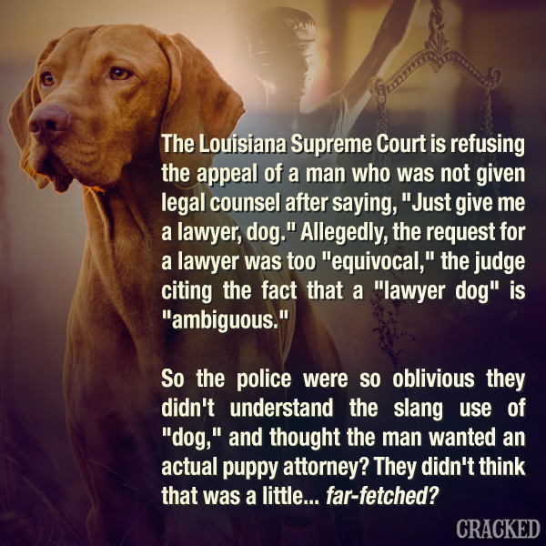 Judge Rules That Asking For A 'Lawyer Dog' Is Too Confusing