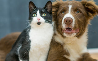 'CatDog' Lied: Science Says Dogs Could Be Smarter Than Cats