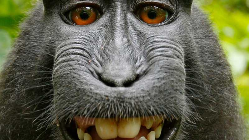 Monkey Steals Guy's Phone, Immediately Takes A Bunch Of Selfies