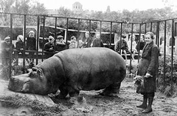 And yet somehow <a href=http://englishrussia.com/2013/09/09/saving-animals-of-the-sieged-city/ target=_blank>this fucking hippopotamus</a> managed to make it through the siege uneaten.