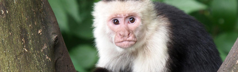 Monkey Prostitution: 5 Insane, REAL Animal Sex Studies
