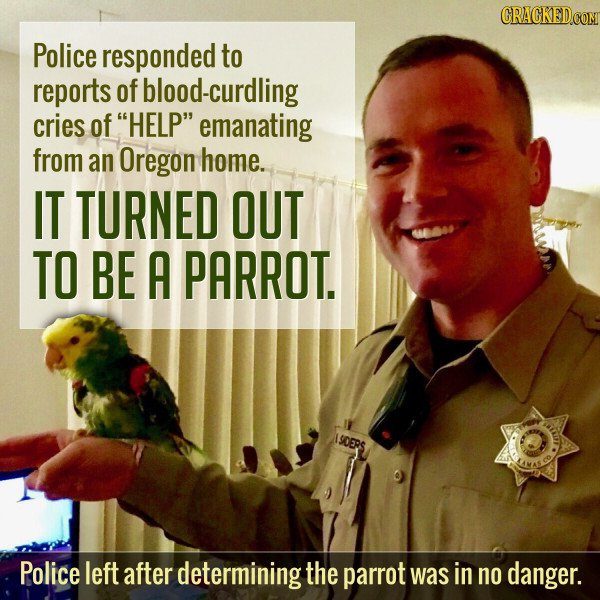 Cops Respond To Cries Of Help... That Came From A Parrot
