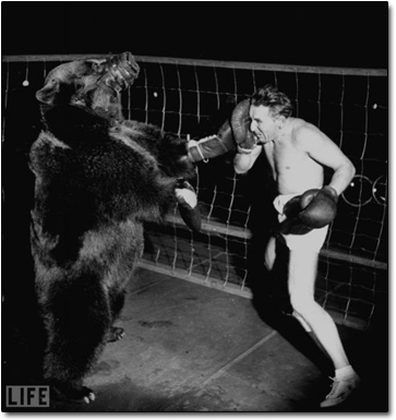 Image result for old-timey bear wrestling