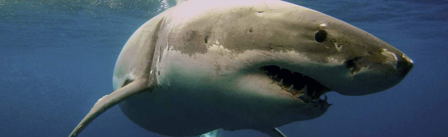 5 Dumb Ways People At The Beach React To Sharks