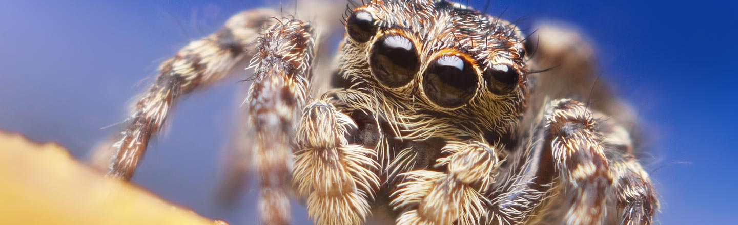 How A Spider Triggered The Best News Story of 2019 So Far