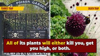 Take A Toxic Tour Through England's Poison Garden