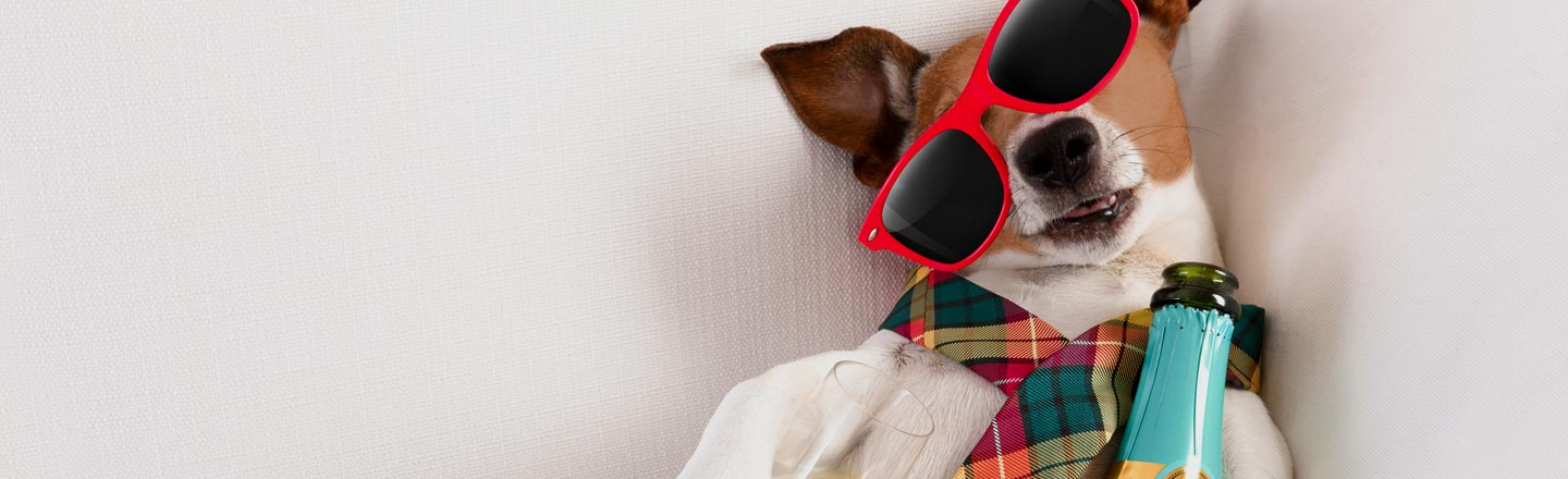 You Can Now Buy Booze For Your Pets. But Why?