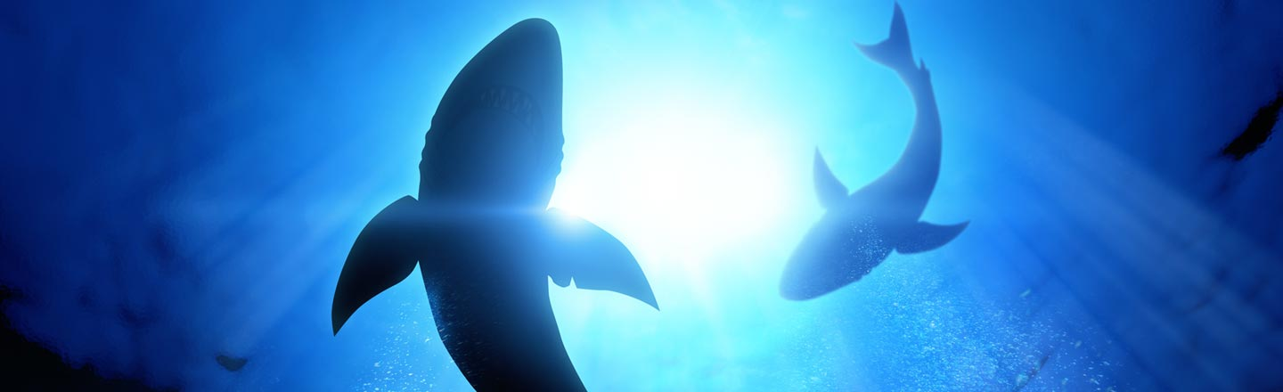 These 400-Year-Old Sharks Are Creepy As Hell