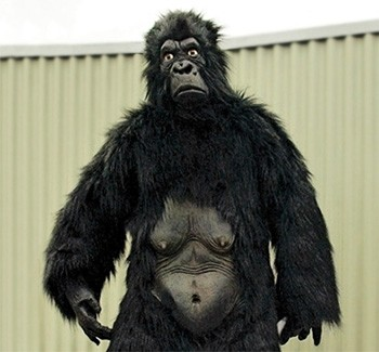 4 Shocking Aspects Of Zoo Animal Robberies Nobody Talks About a bad gorilla costume