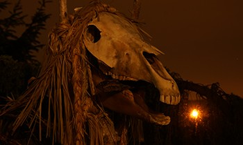 5 Spells That Prove Old-Timey Magic Was Bananas Stupid - a horse's skull against a setting sun