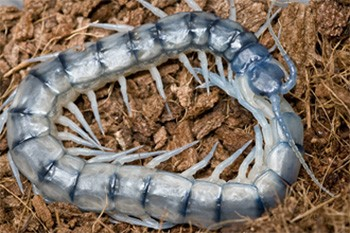 4 Shocking Aspects Of Zoo Animal Robberies Nobody Talks About a scary centipede
