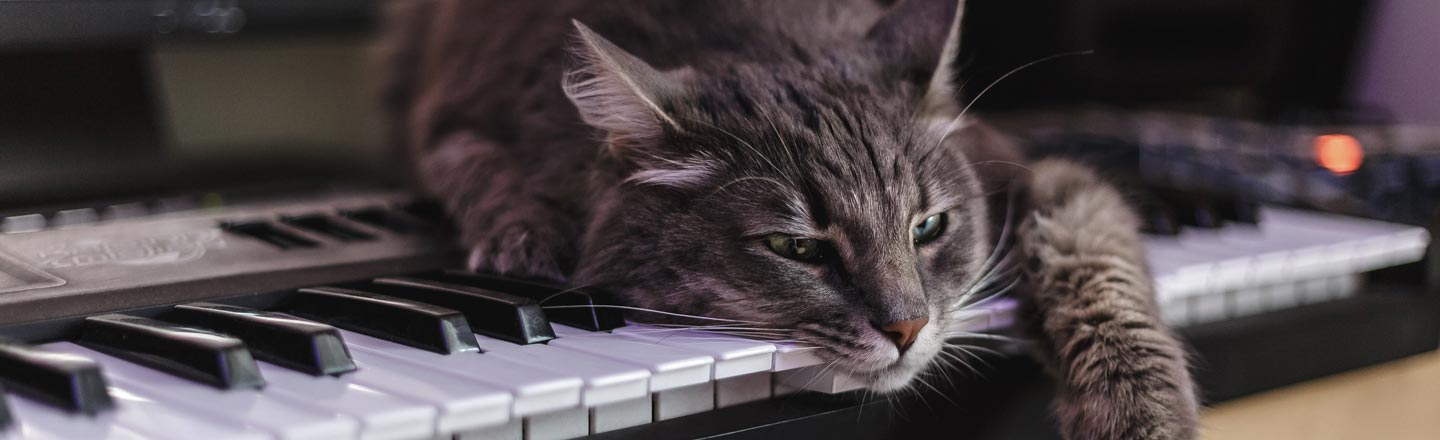 Yes, Somebody Once Thought A Cat Piano Was A Good Idea