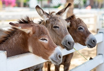 5 Spells That Prove Old-Timey Magic Was Bananas Stupid - a bunch of happy donkeys