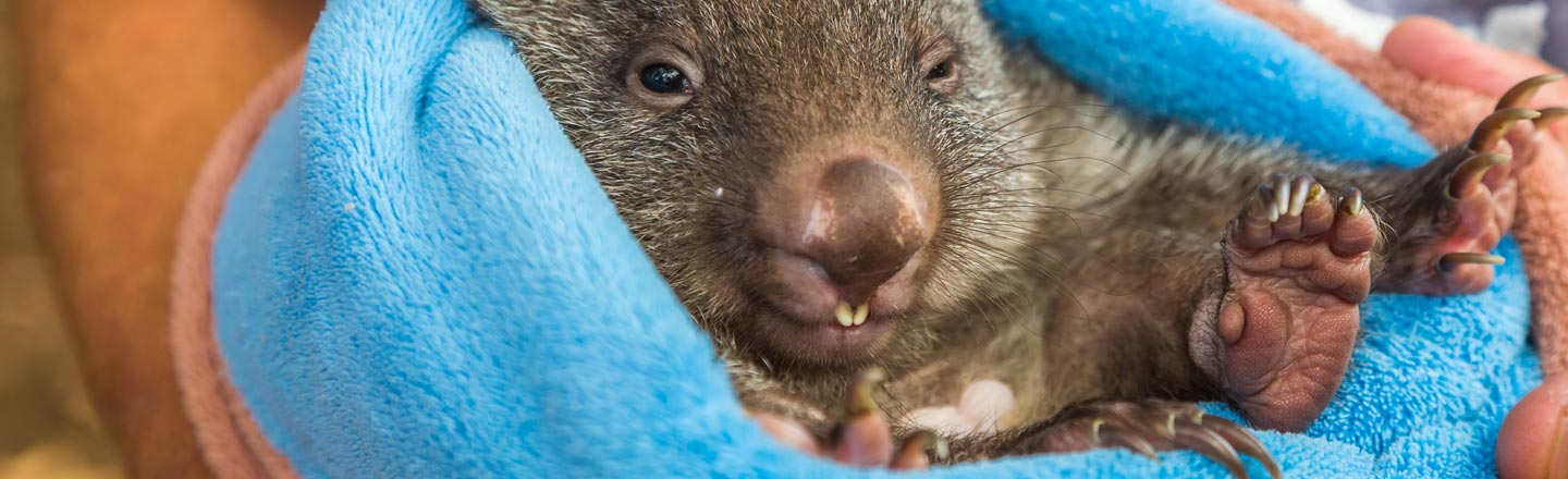 5 Super-Adorable Animals That Can Kill The Hell Out Of You