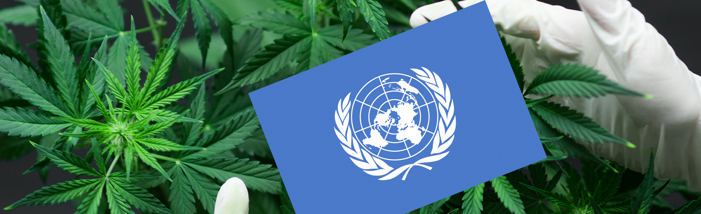 Weed Isn't That Bad, United Nations Rules