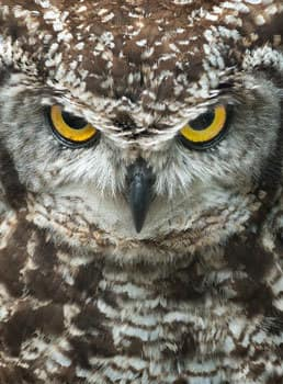 The comfort of safety is an illusion we permit. -Owls