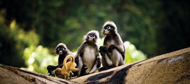 The 7 Best Kinds of Monkeys: A Drunk Column