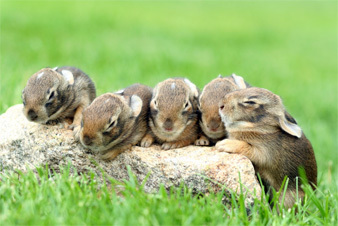 photograph of five baby bunnies on a rock