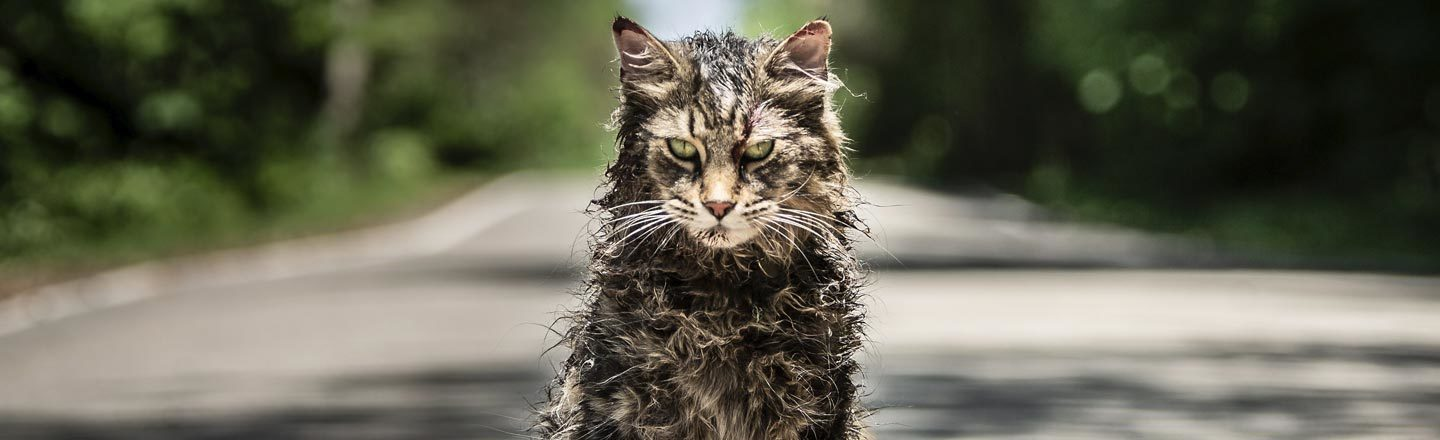 The Cats In The New 'Pet Sematary' Were 'A Pack Of Divas'
