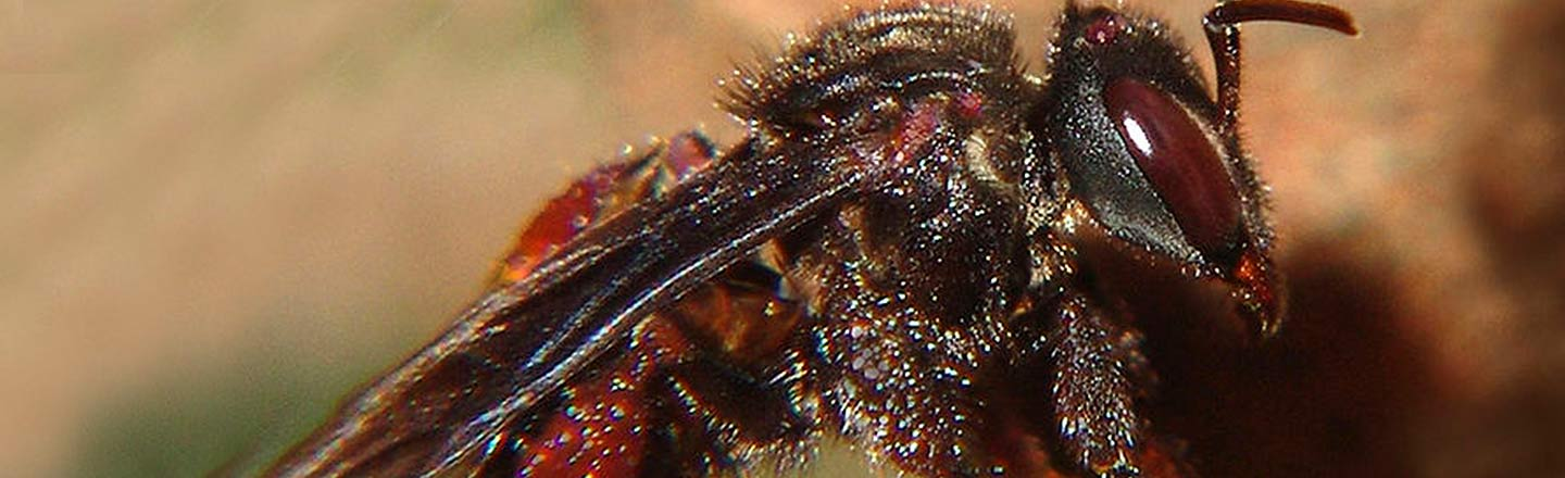 6 Horrifying Bugs That Forgot To Follow The Rules Of Nature