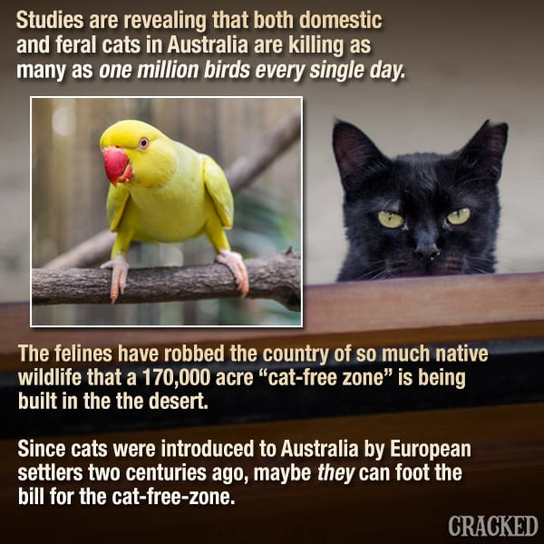 Cats Are Systematically Destroying All Life On Earth
