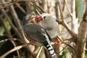 Rat Boners And Drunk Birds: 5 Hilarious Animal Experiments