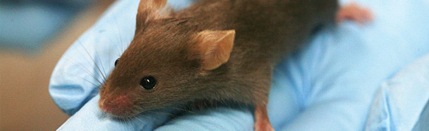 Science Confirms About Mice What Disney's Known Forever