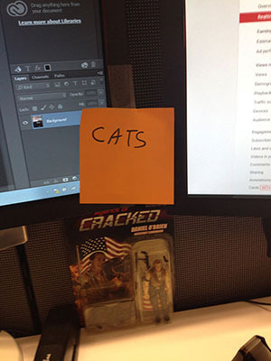 What I Learned Spamming A Suggestion Box With Cat Pictures