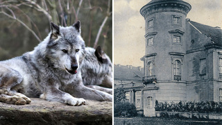 Wolves Have Trapped A Bolivian Orchestra In A Spooky German Castle During All This